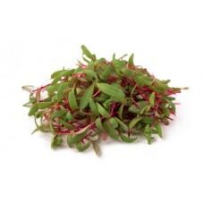 Мікрозелень буряку 50г