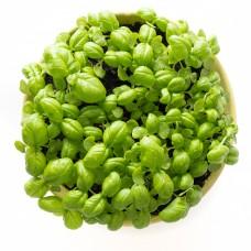 Мікрозелень базиліку зеленого 50гр