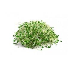 Мікрозелень люцерни 50гр