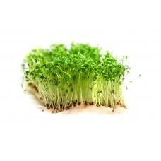 Мікрозелень кресс-салат (мікрогрін) 50г