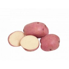 Картопля домашня Славянка