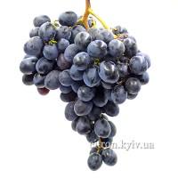 Виноград Молдова ранняя