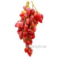 Виноград элитный розовый