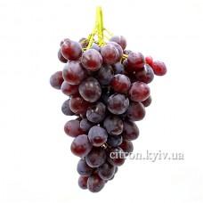 Виноград рожевий Україна