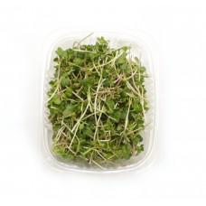 Мікрозелень редис зелений 50гр