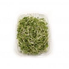Гірчиця мікрозелень 50гр