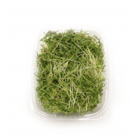 Кінза мікрозелень 50гр