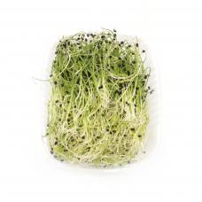 Цибуля мікрозелень 50гр