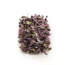 Редис фіолетовий мікрозелень 50гр