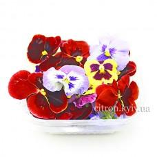 Цветы фиалка уп
