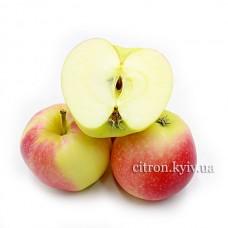 Яблуко Гала