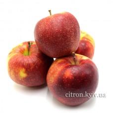 Яблуко Горець
