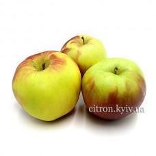 Яблоко Лиголь
