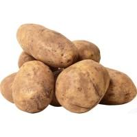 Картопля біла  не мита