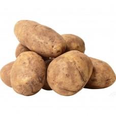 Картофель белый Украина