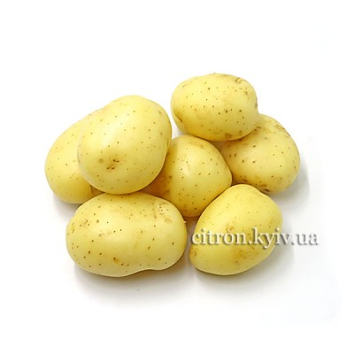 Картопля молода Ізраїль
