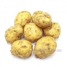 Картопля біла молода немита