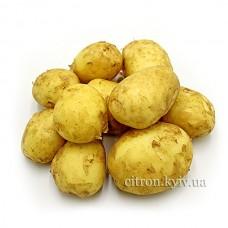 Картофель молодой белый мытый