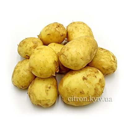 Картопля молода біла мита