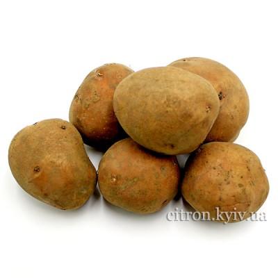 Картопля рожева Україна