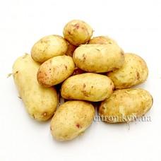 Картопля молода рожева