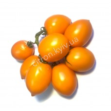 Помідор оранжева сливка на гілці