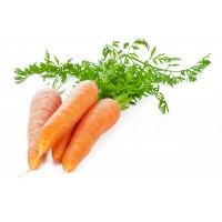 Морква молода з бадиллям